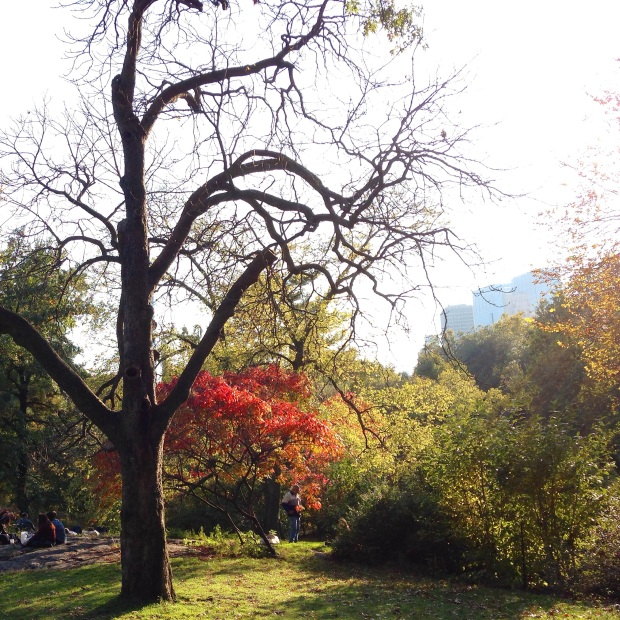 autumn in new york city, central park, fall foliage