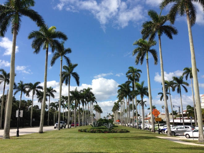 palm trees in palm beach, florida southern florida