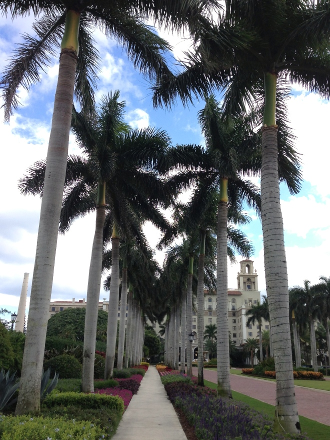 palm trees at the breakers hotel in palm beach, florida southern florida