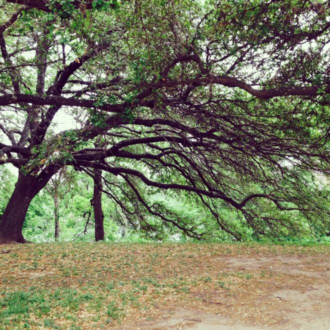 Zilker Metropolitan Park in Austin, Texas